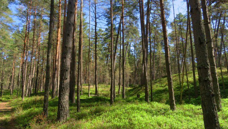 """Latvijas Dabas fonds aicina uz dabas parka """"Piejūra"""" dabas aizsardzības plāna sabiedrisko apspriešanu"""
